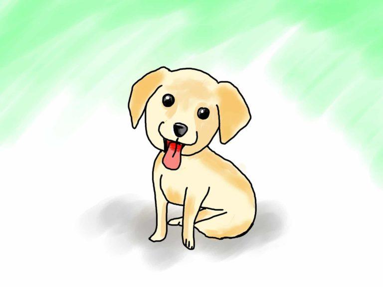 Was sollte im Hundefutter enthalten sein