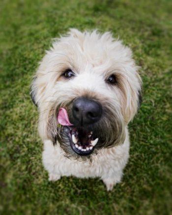 hundefutter zusammensetzung empfehlung