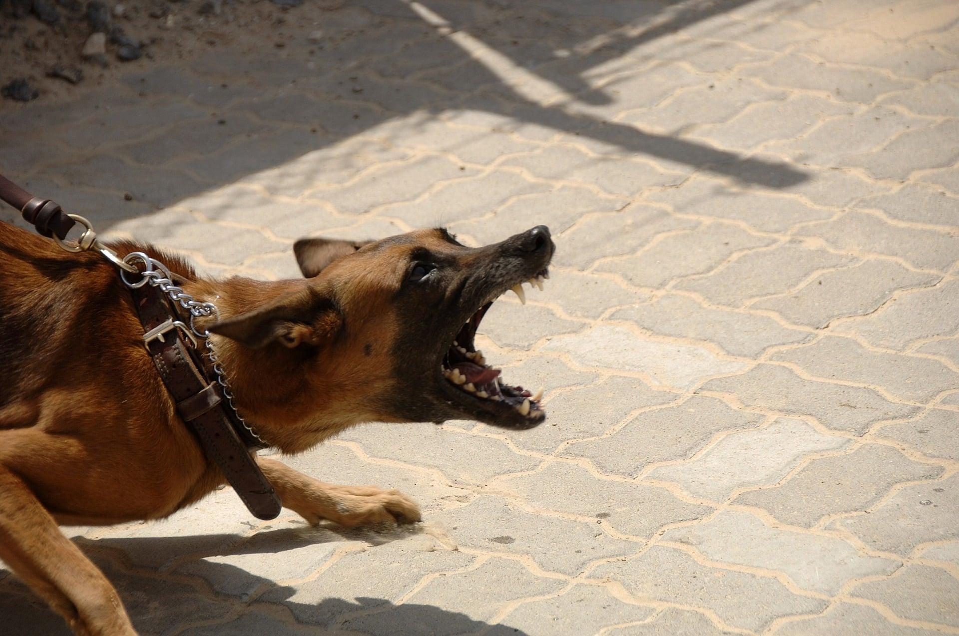gefährlichster hund der welt