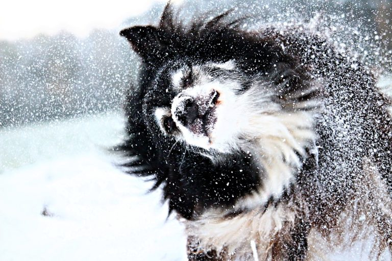 Hundeernährung im Winter